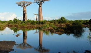 Madagaskar - cuda natury na czwartej wyspie świata