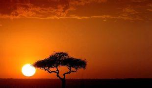 Maasai Mara - wielka migracja gatunków